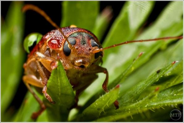 Beetle 1 72x1200