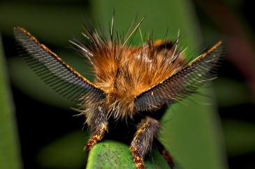 bugs20100302_030_