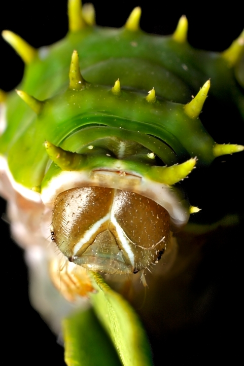 Caterpillar20100409_028_
