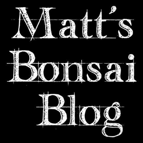 Matt's Bonsai Blog