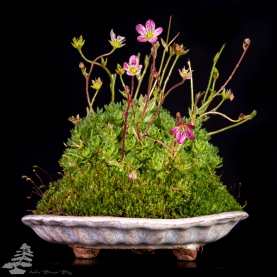 Bonsai_studio_100519_184