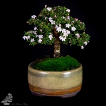 Bonsai_studio_100519_194