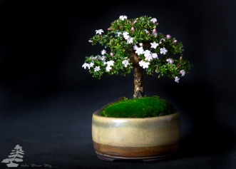 Bonsai_studio_100519_201