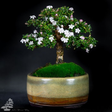 Bonsai_studio_100519_202