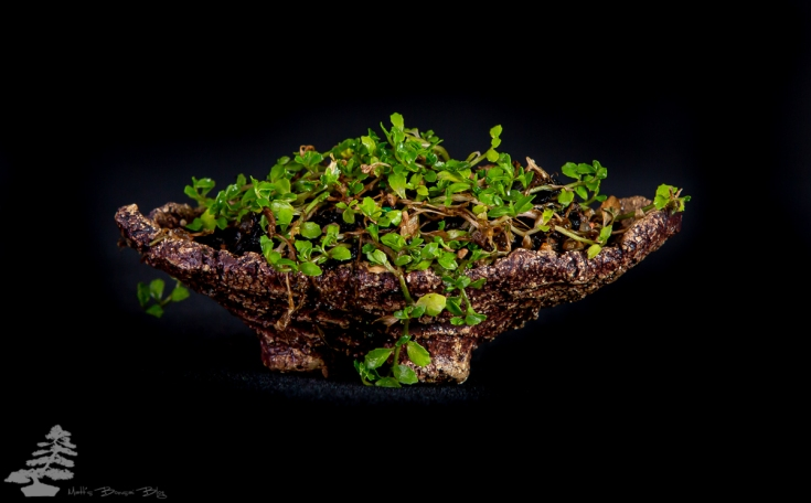Bonsai_studio_100519_224