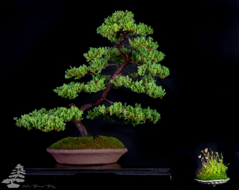 Bonsai_studio_100519_254