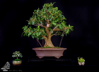 Bonsai_studio_100519_276
