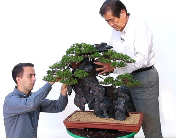 Image Credit: Bonsai Empire Kimura Masterclass Course