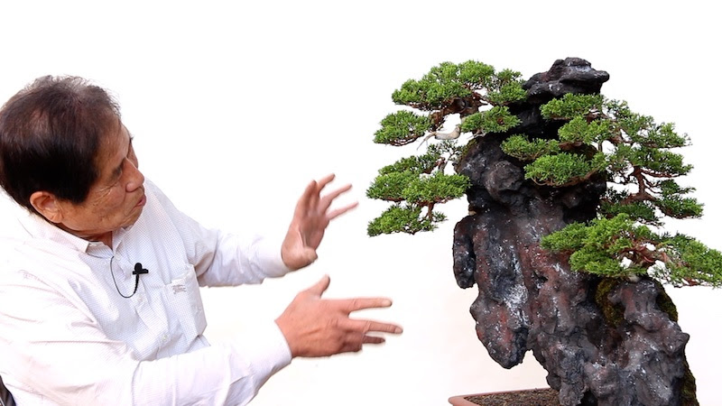Image Credit: Bonsai Empire Kimura Masterclass Course